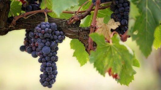 高級チリワインのおすすめ3選!チリ最高峰のワインの特徴とは?